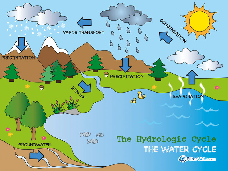 water-hydrologic-cycle.jpg